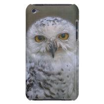 Snowy Owl, Schnee-Eule 002, iPod Touch Case