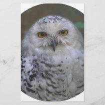 Snowy Owl, Schnee-Eule 02_rd