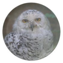 Snowy Owl, Schnee-Eule 02_rd Dinner Plate