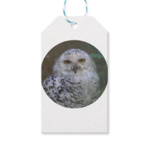 Snowy Owl, Schnee-Eule 02_rd Gift Tags