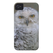 Snowy Owl, Schnee-Eule 02_rd iPhone 4 Case