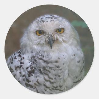 Snowy Owl, Schnee-Eule Classic Round Sticker
