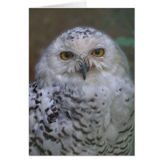 Snowy Owl, Schnee-Eule Greeting Card