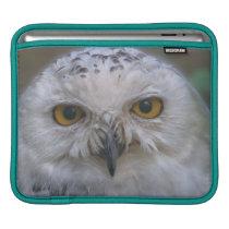 Snowy Owl, Schnee-Eule iPad Sleeve