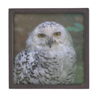 Snowy Owl, Schnee-Eule Premium Gift Box