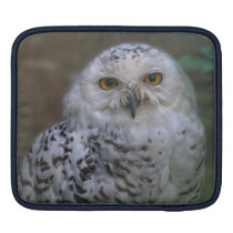 Snowy Owl, Schnee-Eule Sleeve For iPads