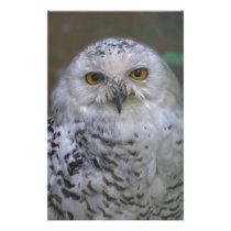 Snowy Owl, Schnee-Eule Stationery