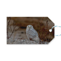 Snowy owl sitting on a rock gift tags