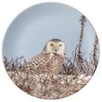 Snowy owl sitting on the beach dinner plate