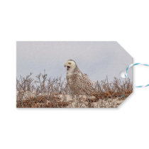 Snowy owl sitting on the beach gift tags