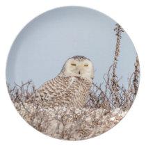 Snowy owl sitting on the beach melamine plate