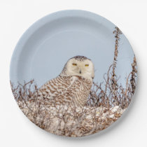 Snowy owl sitting on the beach paper plate