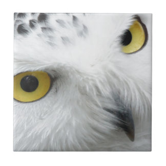 Snowy Owl Small Square Tile