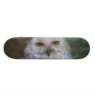 Snowy Owl, snow owl Skateboard Deck