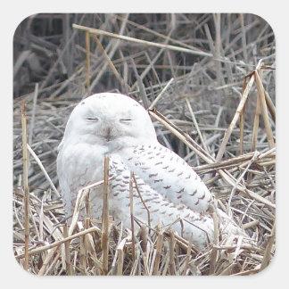 snowy owl square sticker