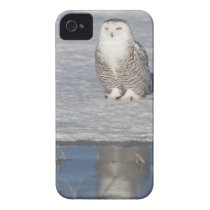 Snowy owl standing near water creating a Case-Mate iPhone 4 case