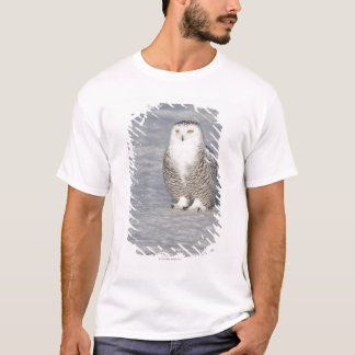 Snowy owl standing near water creating a T-Shirt