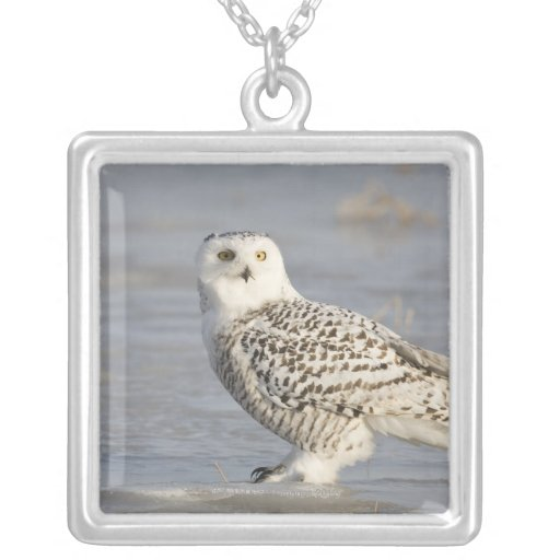 Snowy owl standing on ice, a mouse's tail square pendant necklace