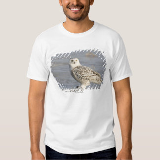 Snowy owl standing on ice, a mouse's tail tee shirt