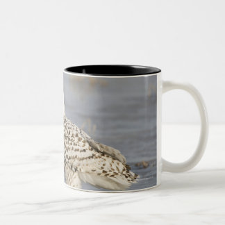 Snowy owl standing on ice, a mouse's tail Two-Tone coffee mug
