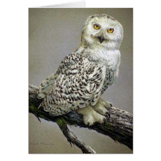 Snowy Owl study Greeting Card