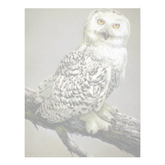 Snowy Owl study Letterhead