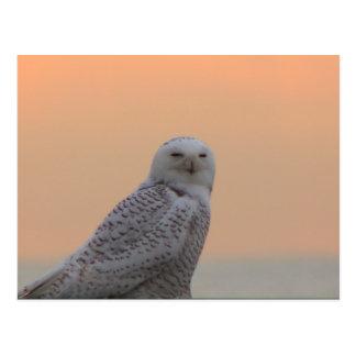 Snowy Owl Sunrise Postcard
