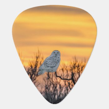 Snowy Owl Sunset Guitar Pick by Winterwoodphoto at Zazzle