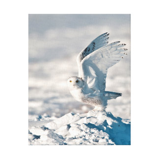 Snowy Owl taking off from snow Stretched Canvas Prints