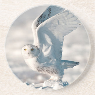 Snowy Owl taking off from snow Drink Coaster