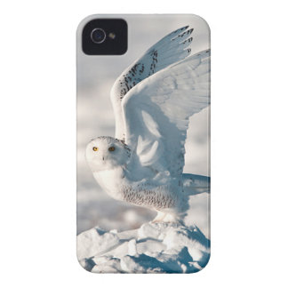 Snowy Owl taking off from snow iPhone 4 Case