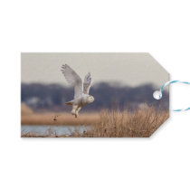 Snowy owl taking off gift tags