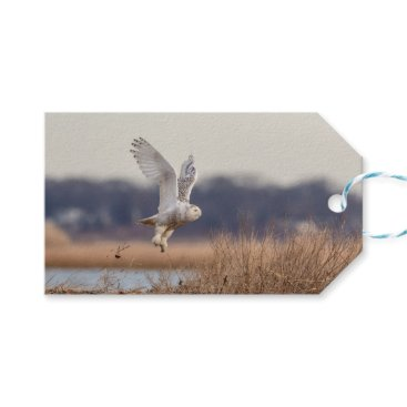 Beach Themed Snowy owl taking off gift tags