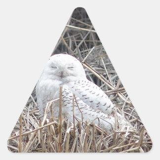 snowy owl triangle sticker