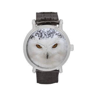 Snowy Owl Watch