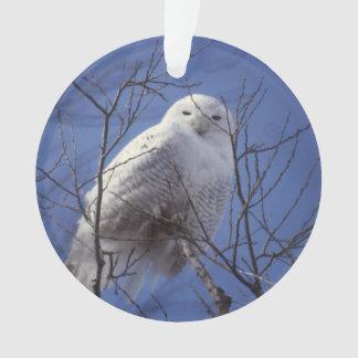 Snowy Owl, White Bird against a Sapphire Blue Sky