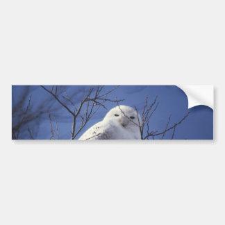 Snowy Owl - White Bird against a Sapphire Blue Sky Bumper Sticker