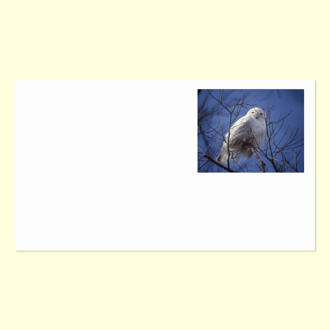 Snowy Owl - White Bird against a Sapphire Blue Sky Double-Sided Standard Business Cards (Pack Of 100)