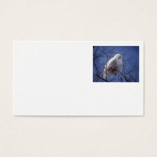 Snowy Owl - White Bird against a Sapphire Blue Sky Business Card