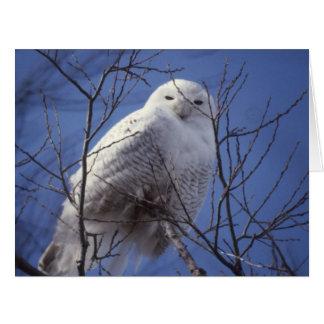 Snowy Owl, White Bird against a Sapphire Blue Sky Card