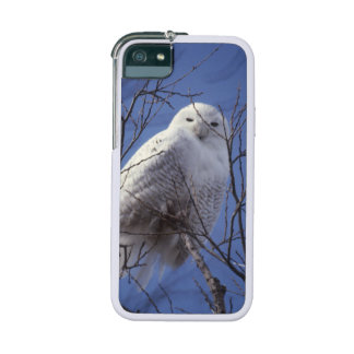 Snowy Owl, White Bird against a Sapphire Blue Sky Cover For iPhone 5