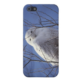 Snowy Owl - White Bird against a Sapphire Blue Sky Case For iPhone SE/5/5s