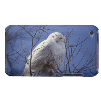 Snowy Owl - White Bird against a Sapphire Blue Sky Case-Mate iPod Touch Case