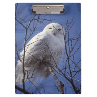 Snowy Owl, White Bird against a Sapphire Blue Sky Clipboard