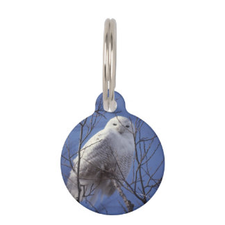 Snowy Owl, White Bird against a Sapphire Blue Sky Pet ID Tag