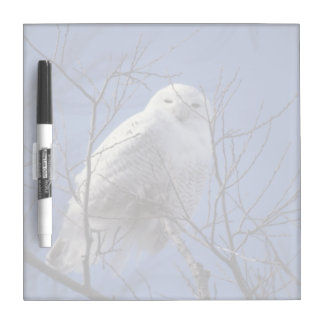 Snowy Owl, White Bird against a Sapphire Blue Sky Dry-Erase Board