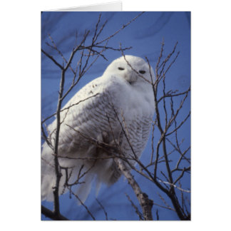 Snowy Owl - White Bird against a Sapphire Blue Sky Greeting Card