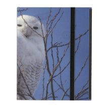 Snowy Owl, White Bird against a Sapphire Blue Sky iPad Folio Case