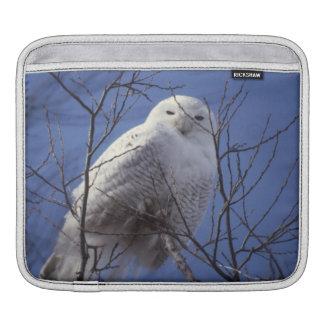 Snowy Owl, White Bird against a Sapphire Blue Sky iPad Sleeves