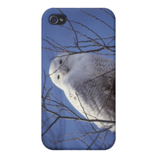 Snowy Owl - White Bird against a Sapphire Blue Sky iPhone 4/4S Cover